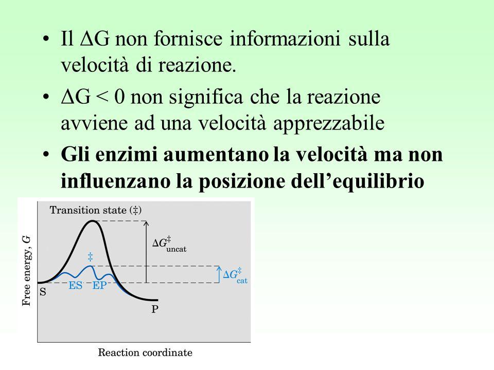 Il ΔG non fornisce informazioni sulla velocità di reazione.