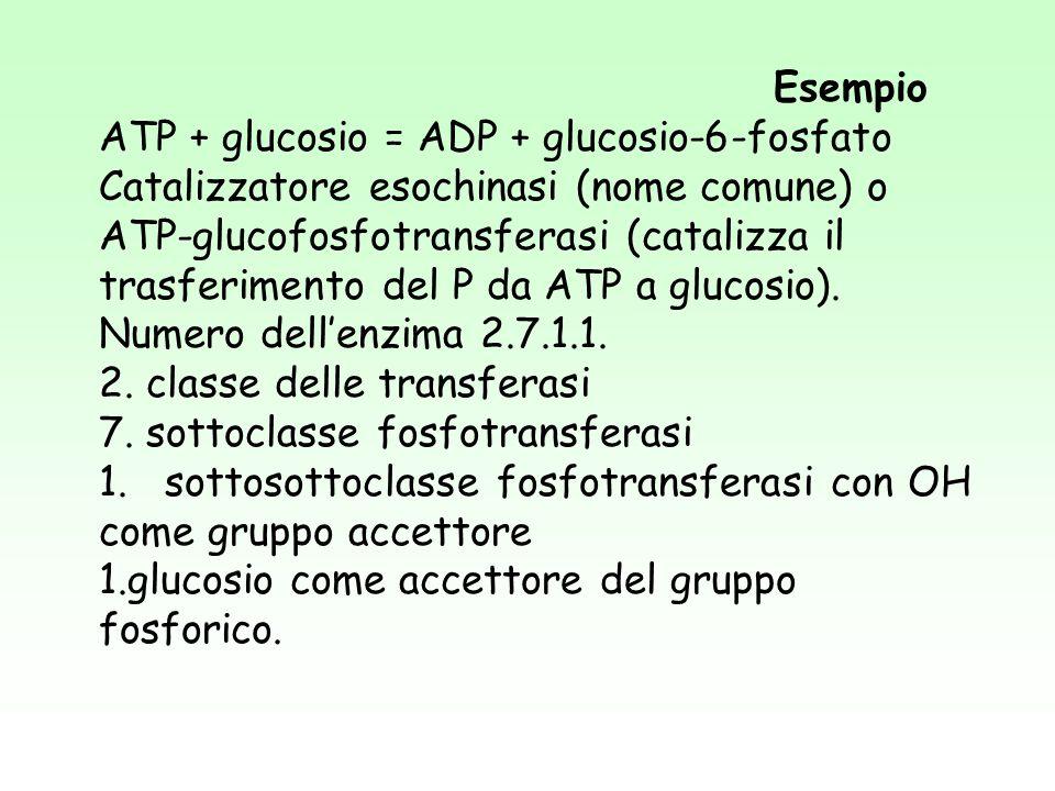 Esempio ATP + glucosio = ADP + glucosio-6-fosfato Catalizzatore esochinasi (nome comune) o ATP-glucofosfotransferasi (catalizza il trasferimento del P da ATP a glucosio).