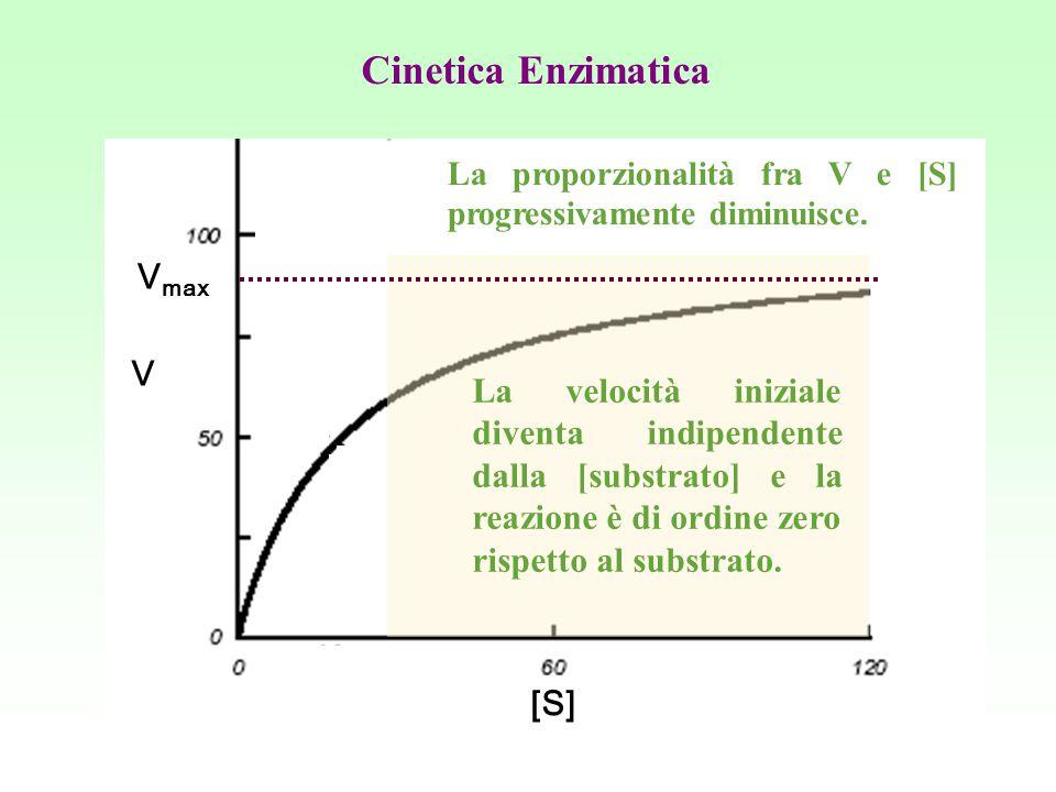 Cinetica Enzimatica Vmax V