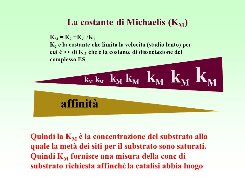 La costante di Michaelis (KM)