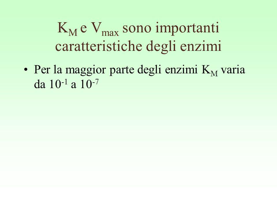 KM e Vmax sono importanti caratteristiche degli enzimi