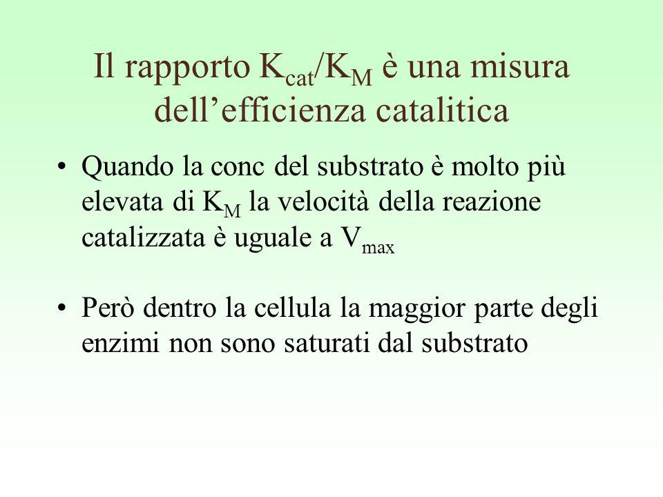 Il rapporto Kcat/KM è una misura dell'efficienza catalitica