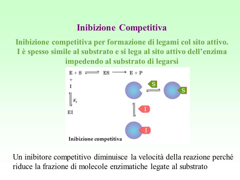 Inibizione Competitiva