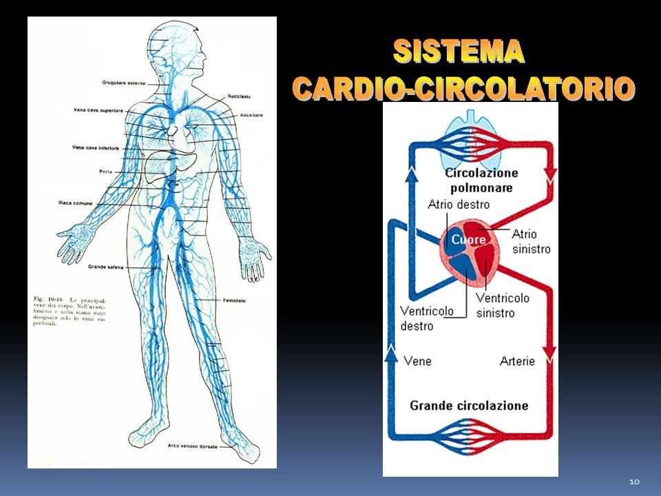 SISTEMA CARDIO-CIRCOLATORIO