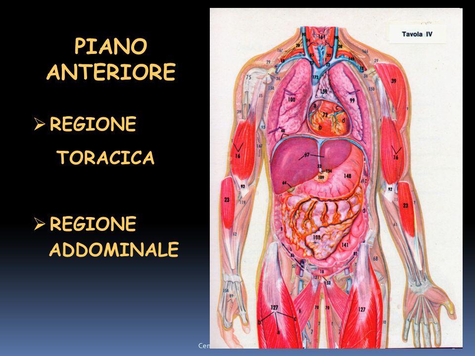 PIANO ANTERIORE REGIONE TORACICA ADDOMINALE