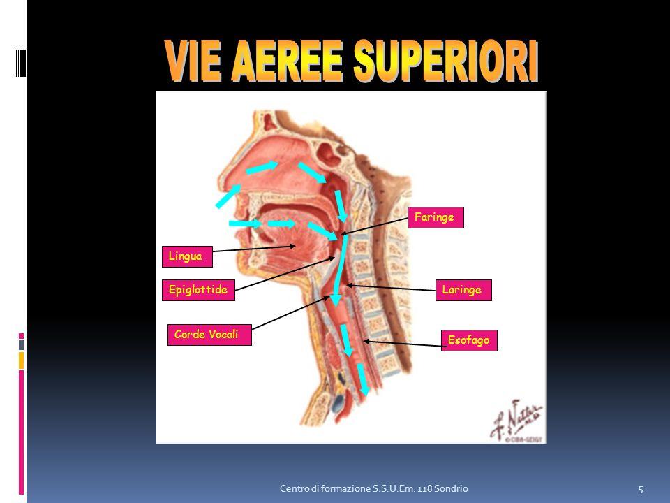 VIE AEREE SUPERIORI Faringe Lingua Epiglottide Laringe Corde Vocali