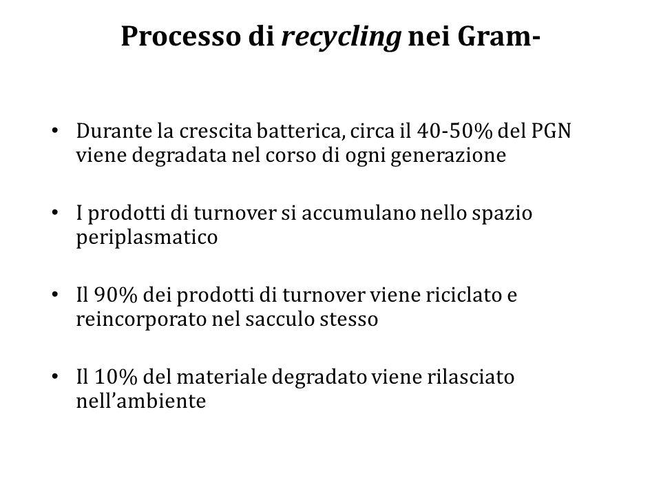 Processo di recycling nei Gram-