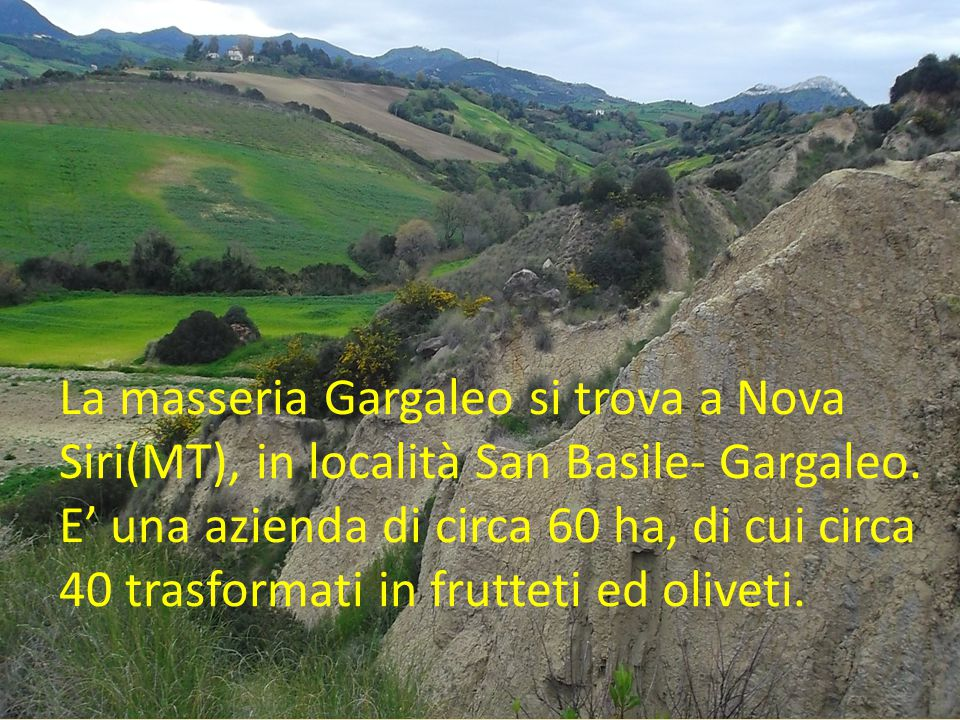 La masseria Gargaleo si trova a Nova Siri(MT), in località San Basile- Gargaleo.