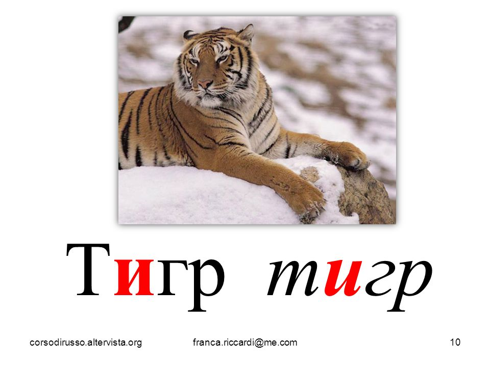 Тигр тигр corsodirusso.altervista.org franca.riccardi@me.com