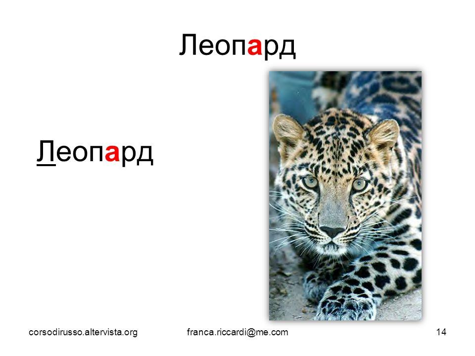 Леопард Леопард corsodirusso.altervista.org franca.riccardi@me.com