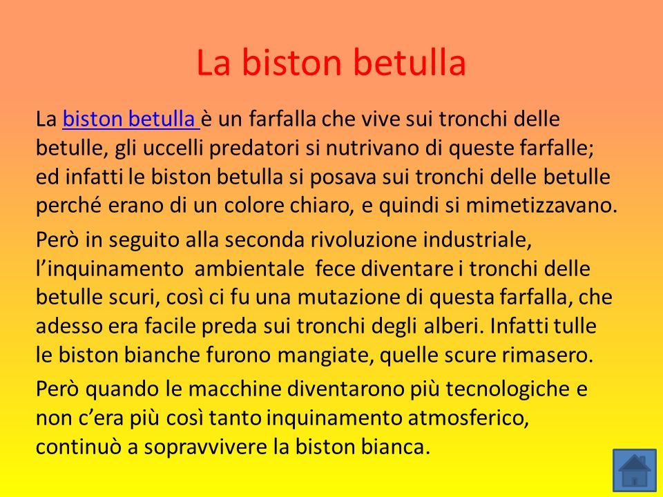 La biston betulla