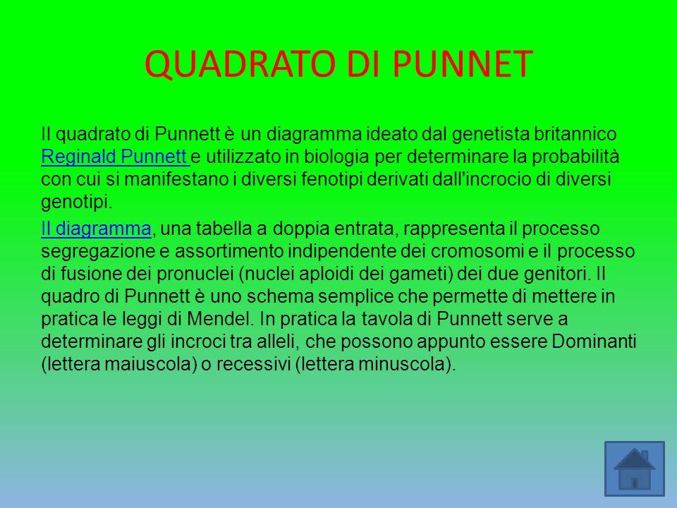 QUADRATO DI PUNNET