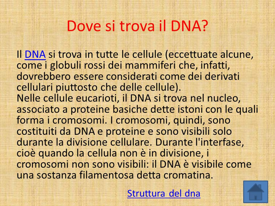 Dove si trova il DNA
