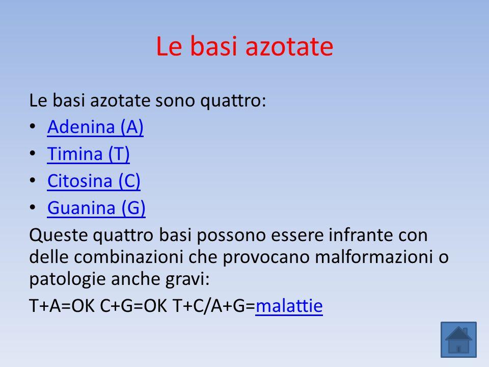 Le basi azotate Le basi azotate sono quattro: Adenina (A) Timina (T)