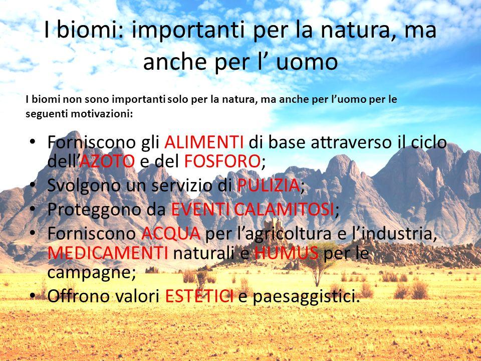 I biomi: importanti per la natura, ma anche per l' uomo