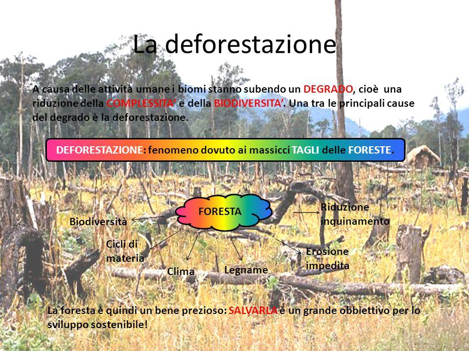 DEFORESTAZIONE: fenomeno dovuto ai massicci TAGLI delle FORESTE.