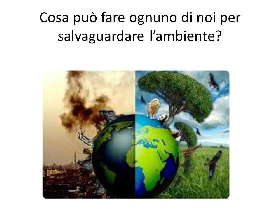 Cosa può fare ognuno di noi per salvaguardare l'ambiente