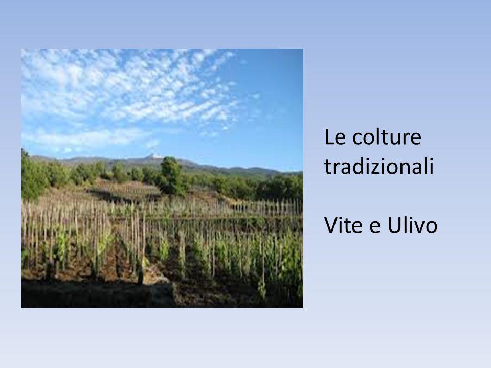 Le colture tradizionali Vite e Ulivo
