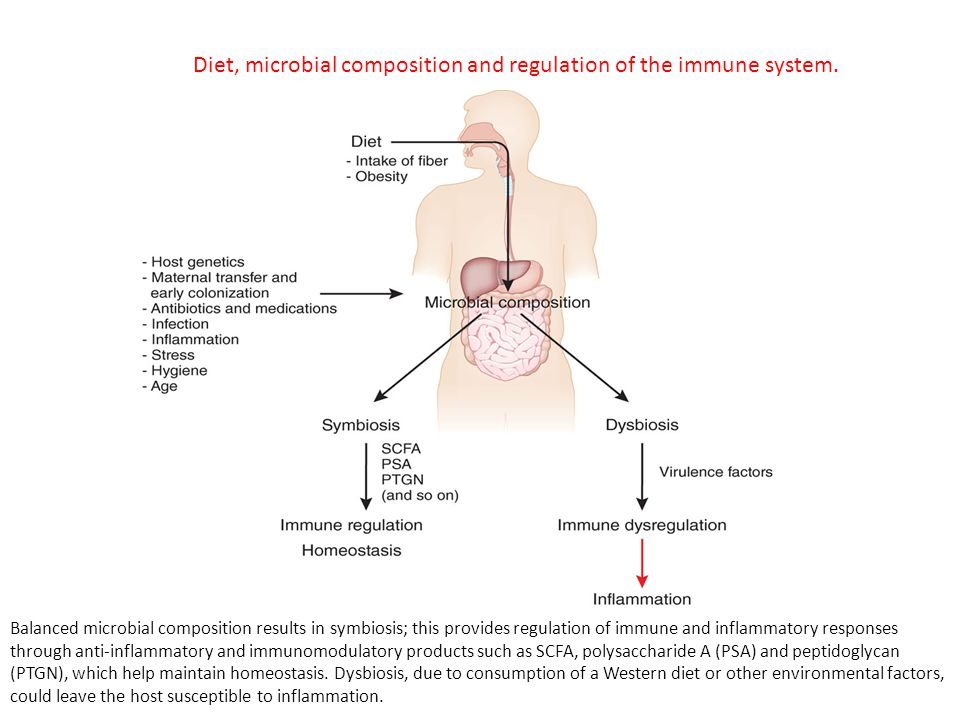Diet, microbial composition and regulation of the immune system.