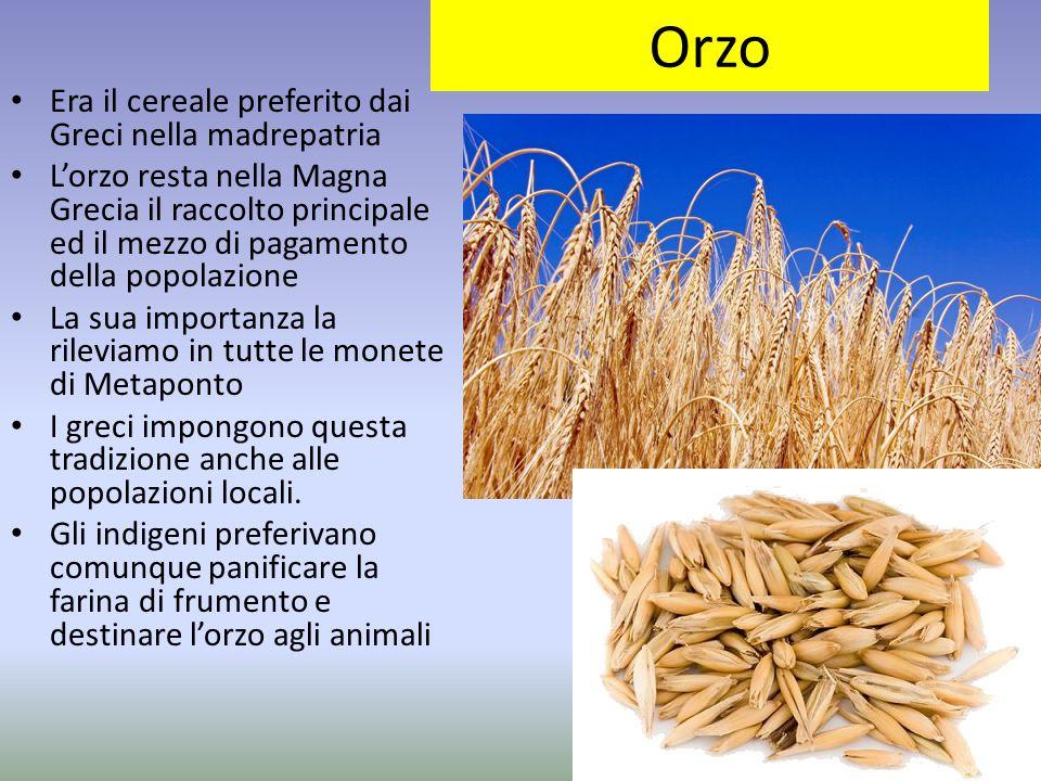 Orzo Era il cereale preferito dai Greci nella madrepatria