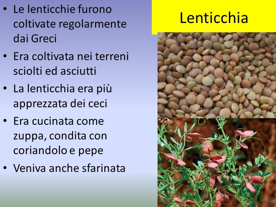Lenticchia Le lenticchie furono coltivate regolarmente dai Greci