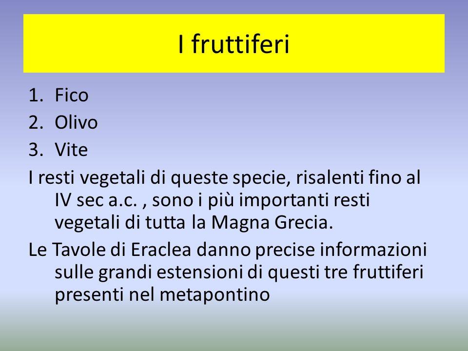 I fruttiferi Fico Olivo Vite