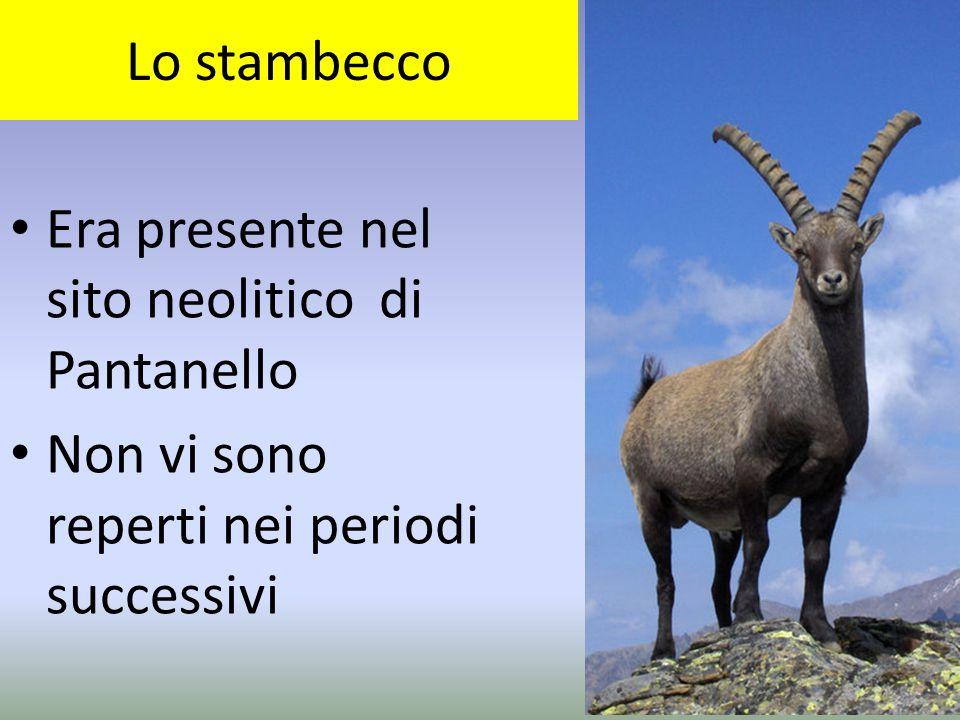 Lo stambecco Era presente nel sito neolitico di Pantanello.