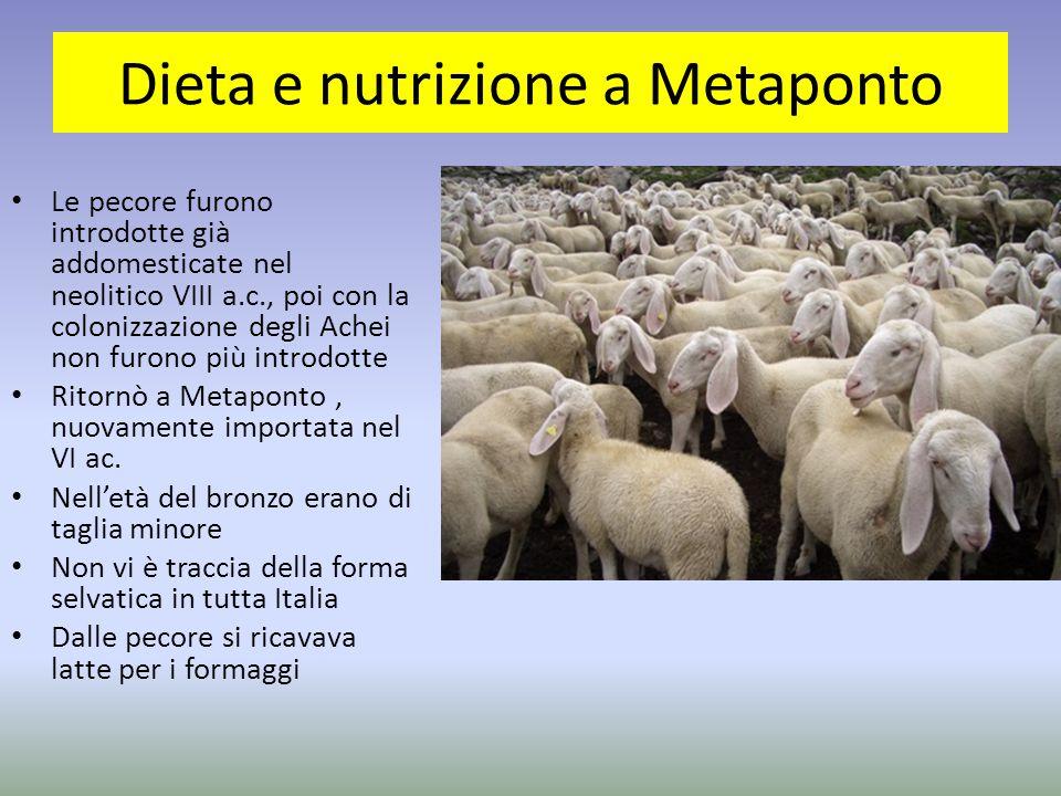Dieta e nutrizione a Metaponto