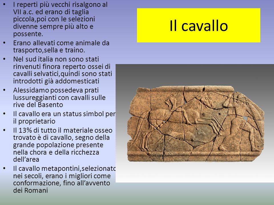 I reperti più vecchi risalgono al VII a. c