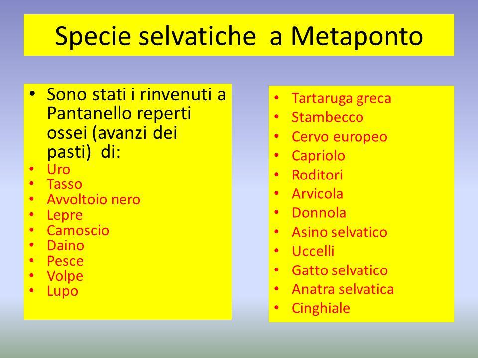 Specie selvatiche a Metaponto