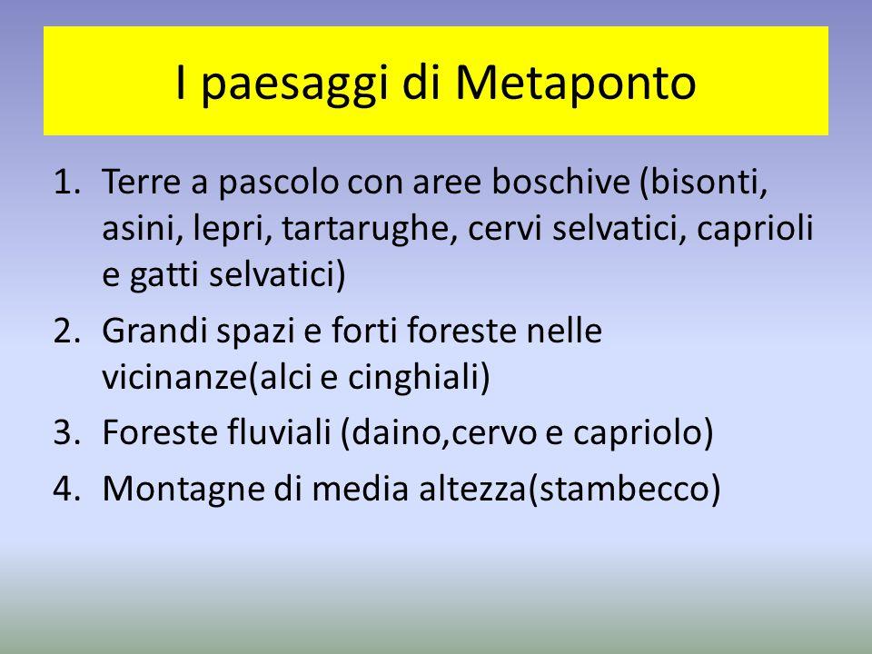 I paesaggi di Metaponto