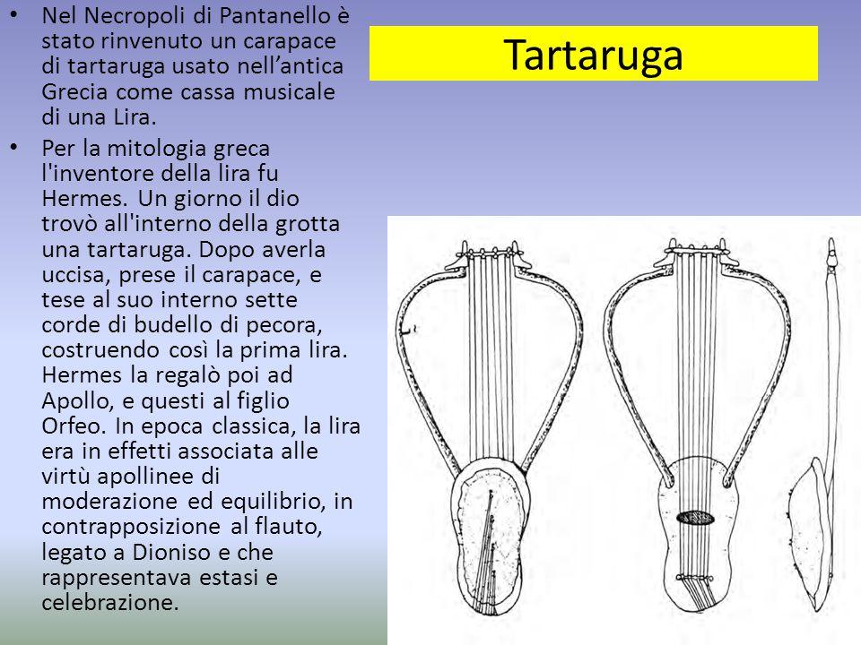 Nel Necropoli di Pantanello è stato rinvenuto un carapace di tartaruga usato nell'antica Grecia come cassa musicale di una Lira.
