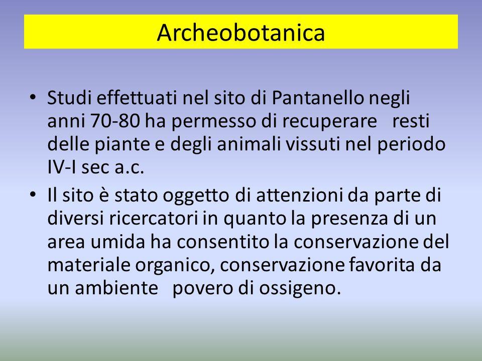 Archeobotanica