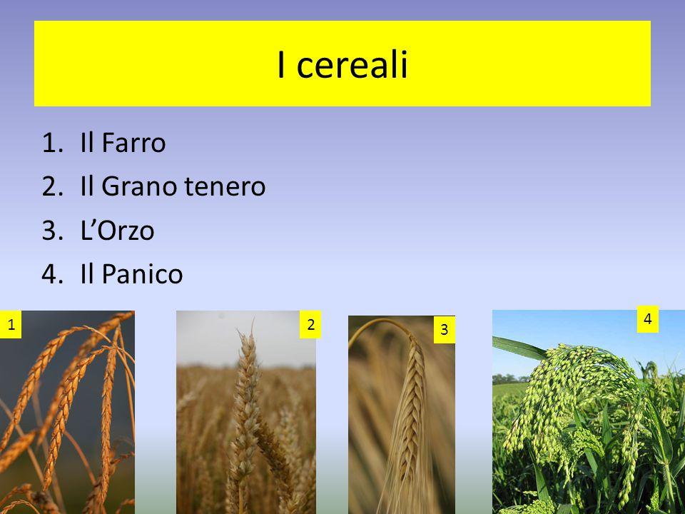 I cereali Il Farro Il Grano tenero L'Orzo Il Panico 4 1 2 3