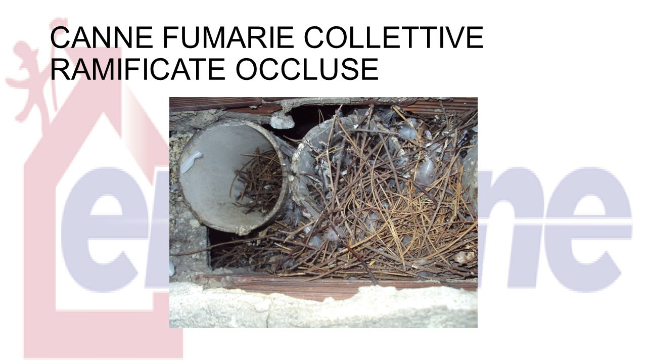 CANNE FUMARIE COLLETTIVE RAMIFICATE OCCLUSE