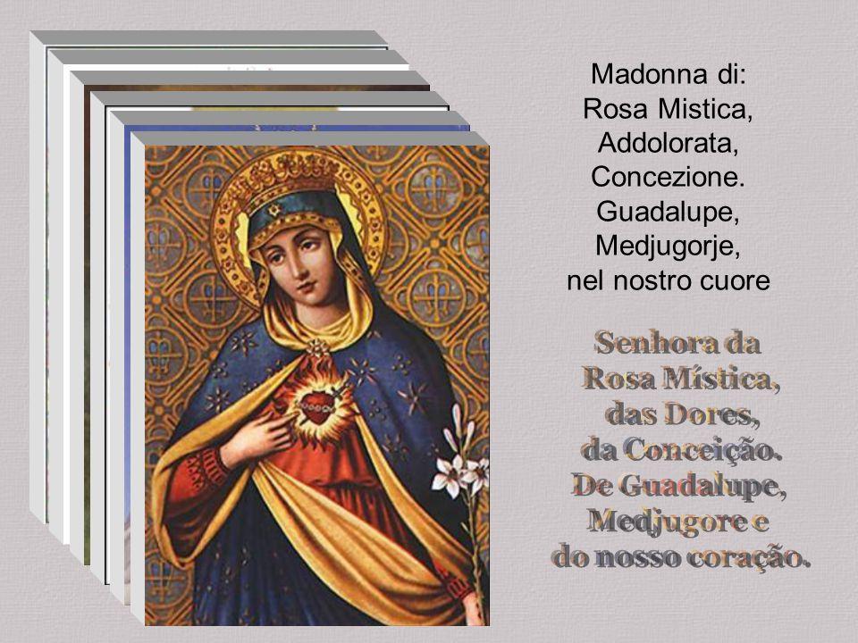 Madonna di: Rosa Mistica, Addolorata, Concezione