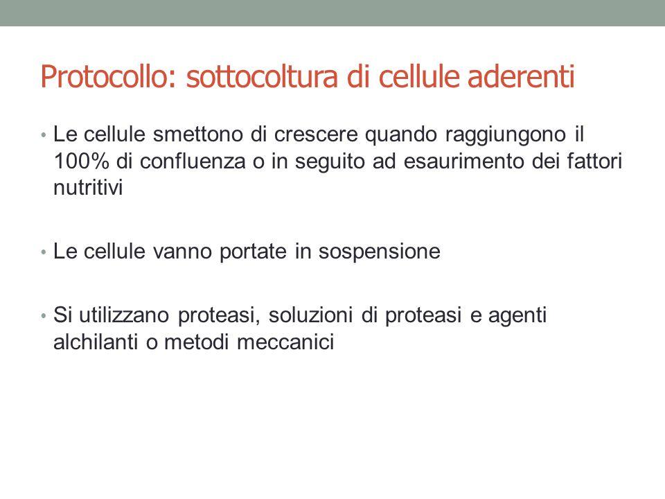 Protocollo: sottocoltura di cellule aderenti