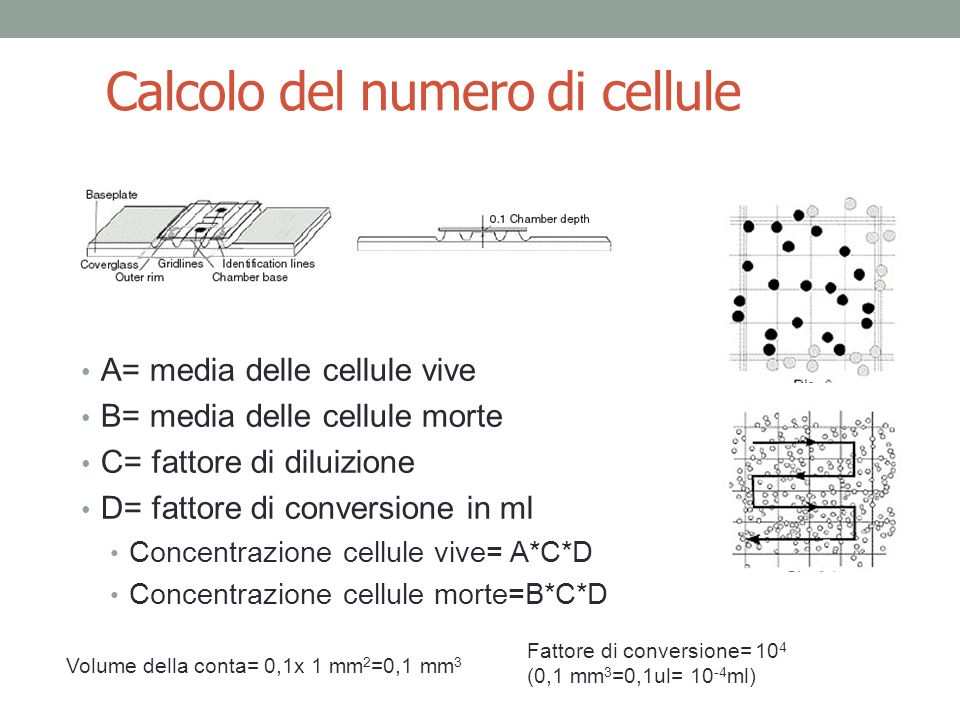 Calcolo del numero di cellule