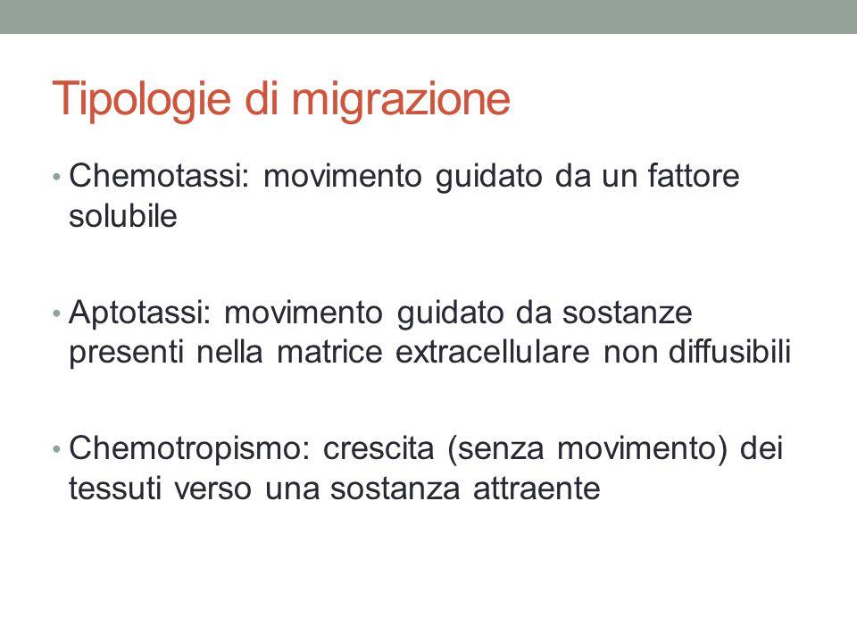 Tipologie di migrazione