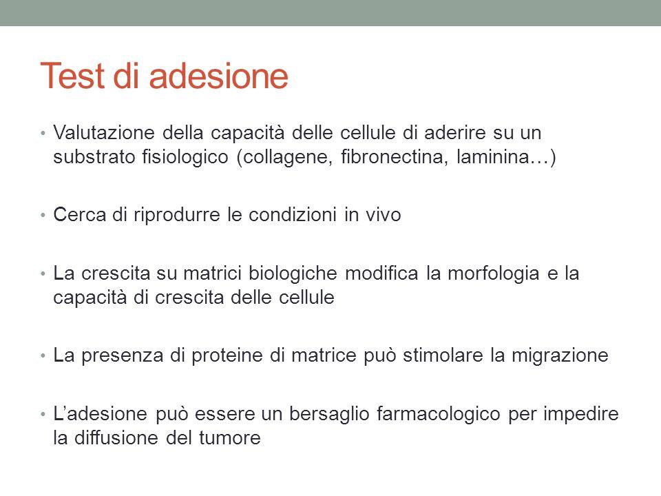 Test di adesione Valutazione della capacità delle cellule di aderire su un substrato fisiologico (collagene, fibronectina, laminina…)