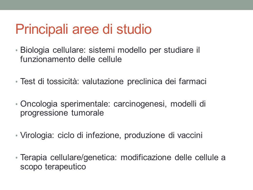 Principali aree di studio