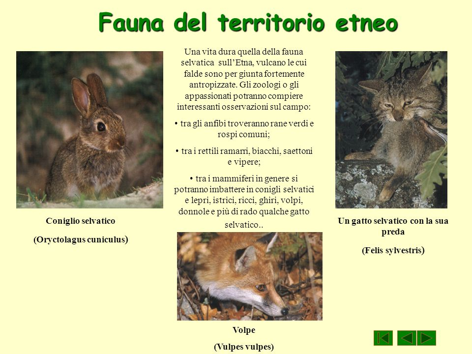 Fauna del territorio etneo