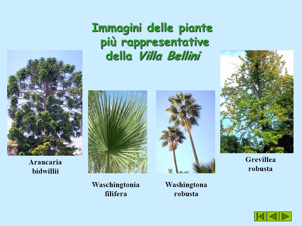 Immagini delle piante più rappresentative della Villa Bellini