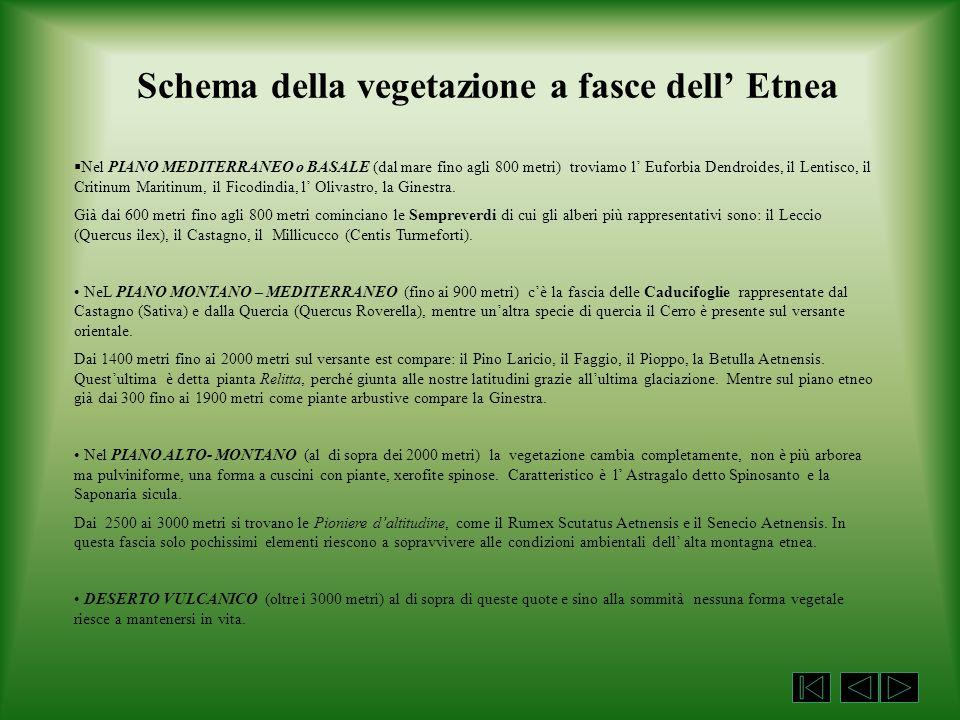 Schema della vegetazione a fasce dell' Etnea