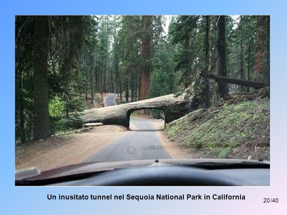 Un inusitato tunnel nel Sequoia National Park in California