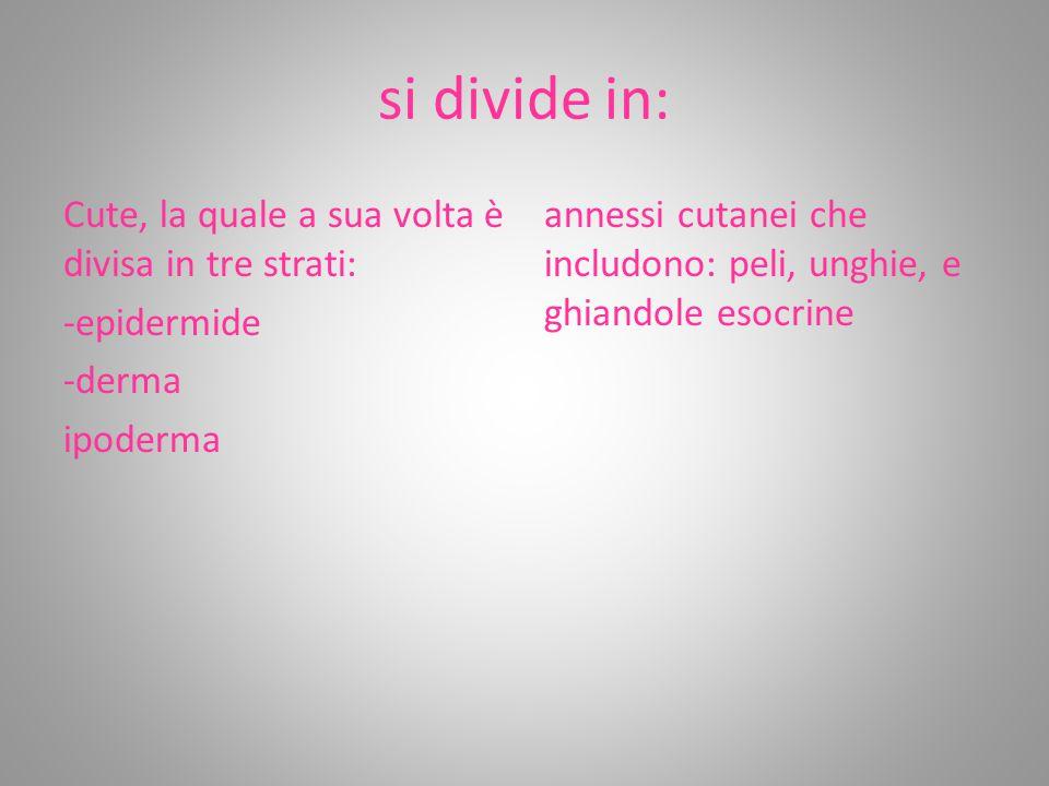 si divide in: Cute, la quale a sua volta è divisa in tre strati: -epidermide -derma ipoderma