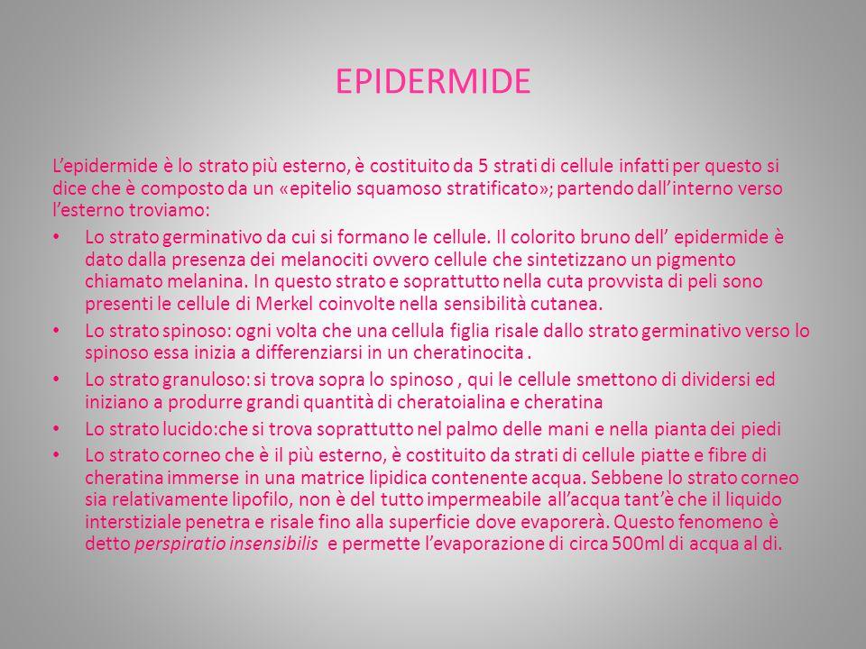 EPIDERMIDE