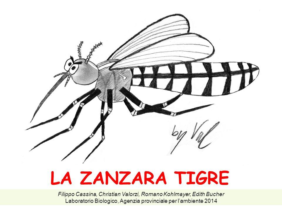 LA ZANZARA TIGRE Filippo Cassina, Christian Valorzi, Romano Kohlmayer, Edith Bucher.
