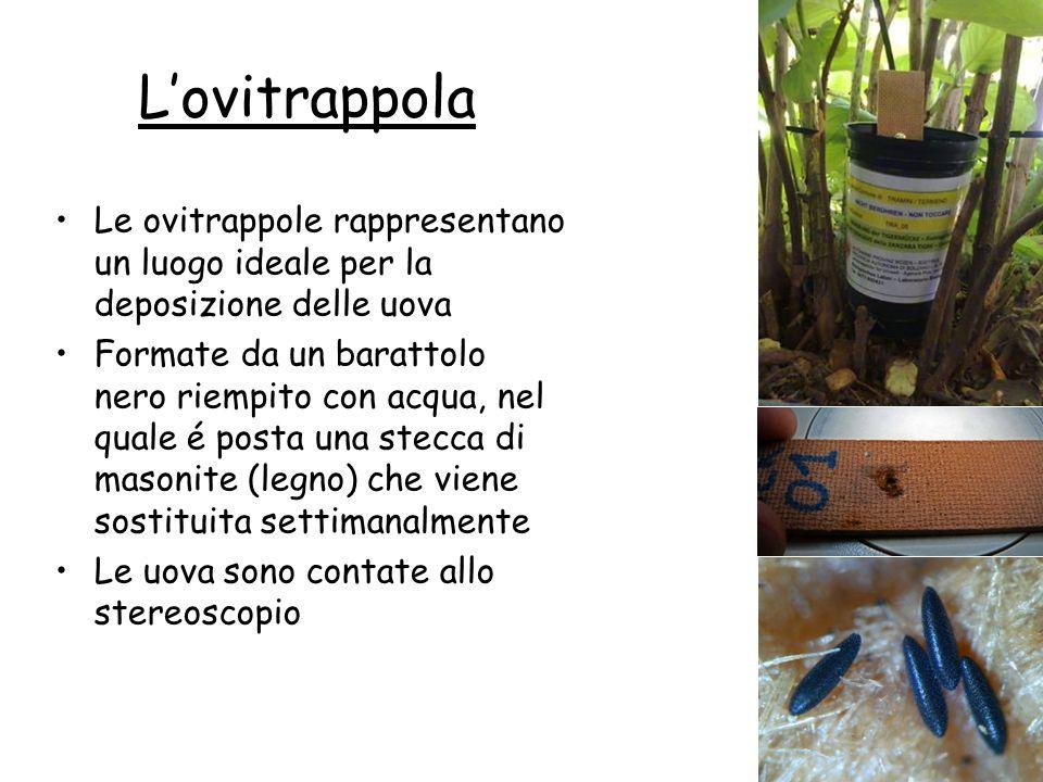 L'ovitrappola Le ovitrappole rappresentano un luogo ideale per la deposizione delle uova.