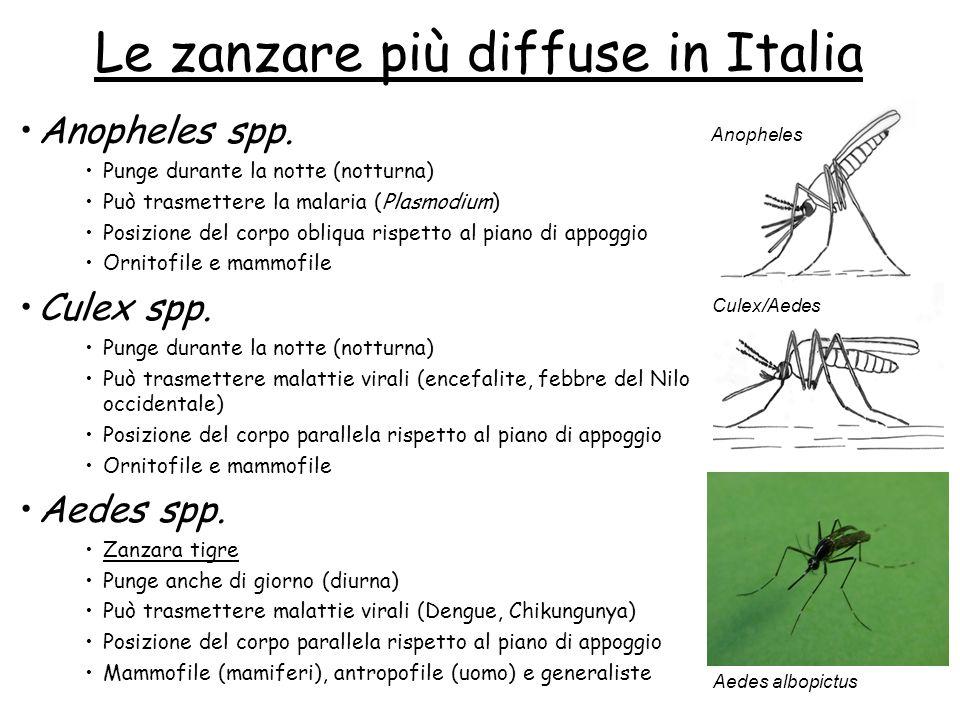 Le zanzare più diffuse in Italia